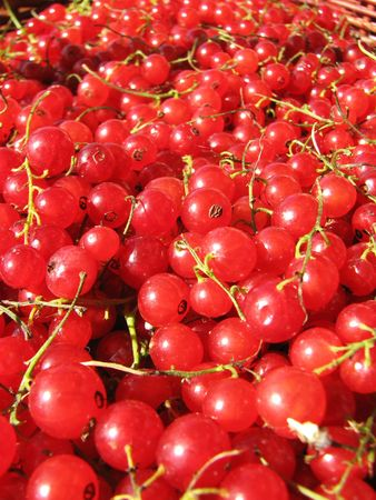 fresh ripe berries of the red currant Stock Photo - 1827740
