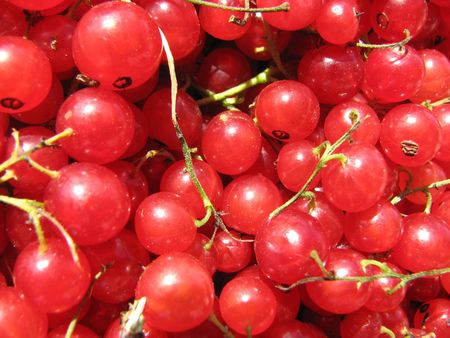 close-up ripe berries of the red currant Stock Photo - 1883968