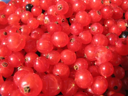 ripe fresh berries of the red currant Stock Photo - 1883972