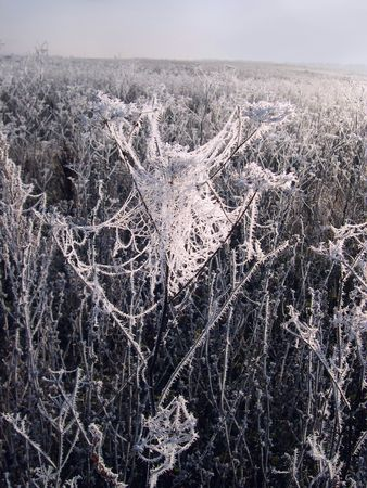 shimmering frozen branches in the winter rays of the sun Stock Photo - 2247982