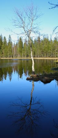a tree and its reflection on a water Stock Photo