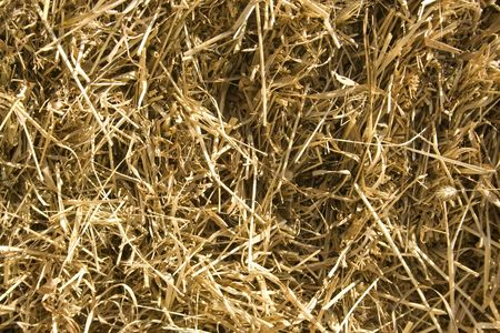 Hay in the light of summer sun