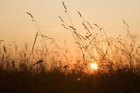 sunrise on Kizhi island in the grass