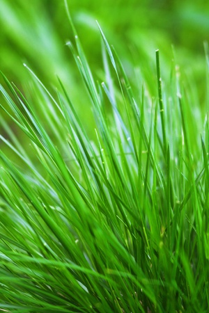 a bunch of green grass growing outdoors Stock Photo