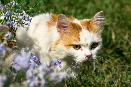 Red white cat among the green grass