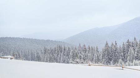 cloud drift: Ukrainian Carpathian mountains in winter, lots of snow, a great frost, tourism.
