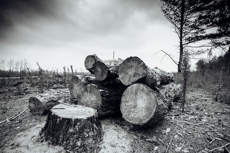 Logs trees after logging, wasteland stump Saw photo