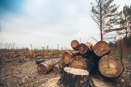 Logs bomen na houtkap, woestenij stomp Saw