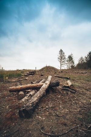 wasteland: Logs trees after logging, wasteland stump Saw