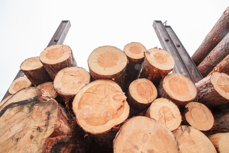 lumber: product wood lumber industry starcking Stock Photo