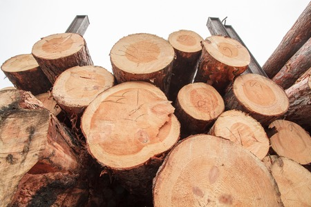 lumber industry: product wood lumber industry storage Stock Photo