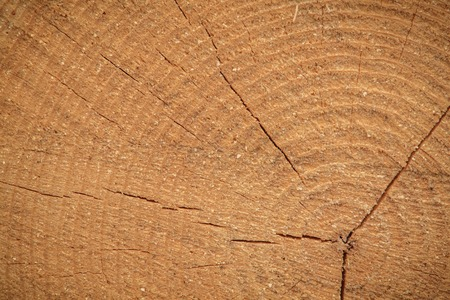 cut tree wood natural log Stock Photo