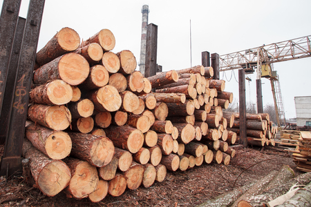 timber: wood sawmill log crane timber