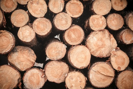 logging: logs wood stack texture logging Stock Photo