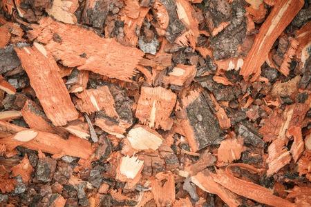cut off: cut off tree bark nature texture