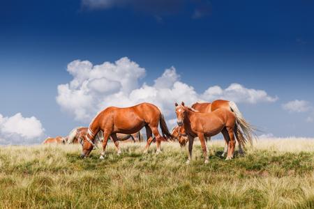 Rebaño de caballos en las montañas prado paisaje nube Foto de archivo - 85436594