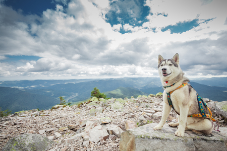 Dog sitting on the top of the beautiful mountain