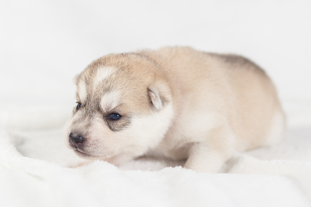 Funny puppy one month old isolated