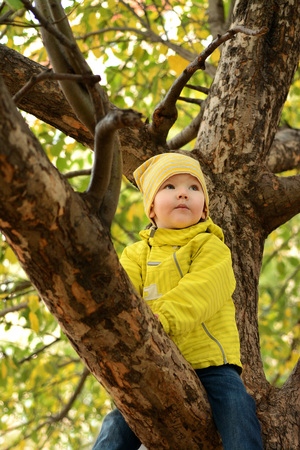dreaminess: Child on a tree Stock Photo