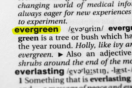 Highlighted word evergreen concept and meaning.