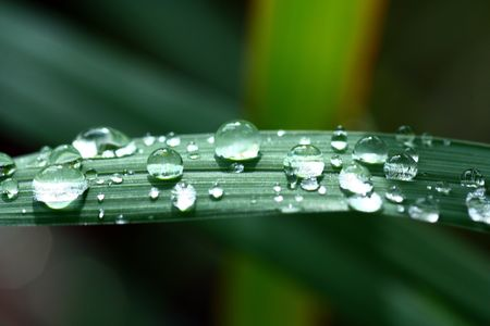 It is magic drop on the leaf. Stock Photo - 6696382
