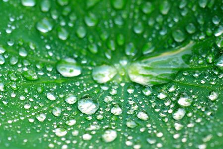 The water drop on the leaf in the morning. Stock Photo - 6696446