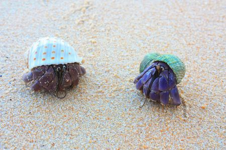Close up color picture of hermit crab crawling through white sandy beach. Stock Photo