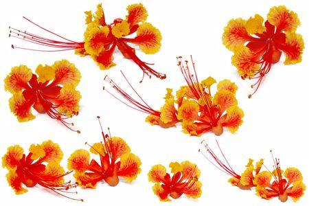 nice Flower Stock Photo - 7169358