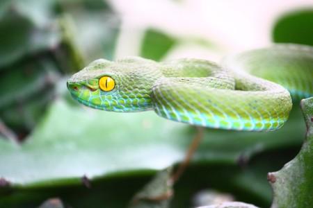 Green snake Reklamní fotografie