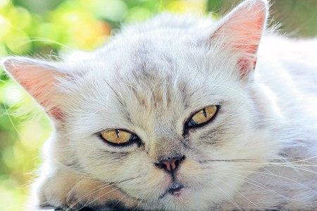 banter: Tabby catbe sleepy