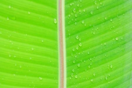 leaf in raining Season photo
