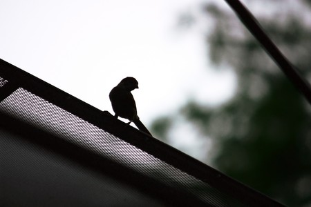 shadow of sparrow Stock Photo - 7916172