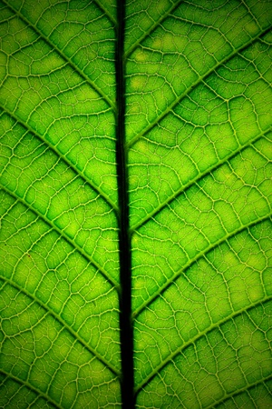 Leaf of a plant close up Stock Photo - 8256393