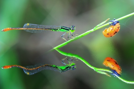 Dragonfly on green grass photo