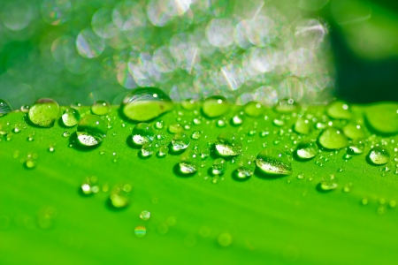 Water dew drop in the morning.