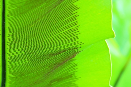 Leaf of a plant close up  Stock Photo - 9280977
