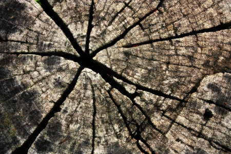 wooden beams: Old cracked of wood texture  Stock Photo
