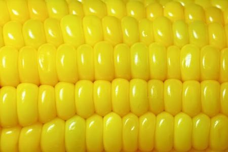corn close up photo
