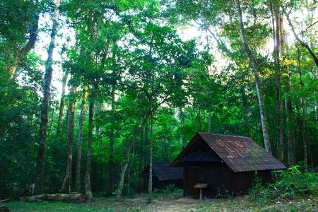 Hut of Communist Thailand in green forest (1968-1982) Stock Photo - 11925149