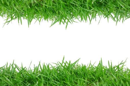 fresh spring green grass isolated on white background  photo