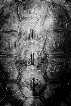 Turtle shell background texture macro  Selective focus
