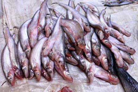 sheatfish: Venta Sheatfish en el mercado local, Tailandia