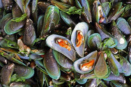 mollusca: Fresh mussels at the market in Thailand