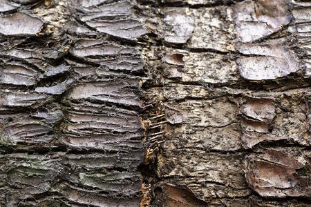 bark texture: old tree bark texture Stock Photo