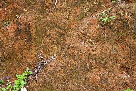laterite: Detail of laterite soil background