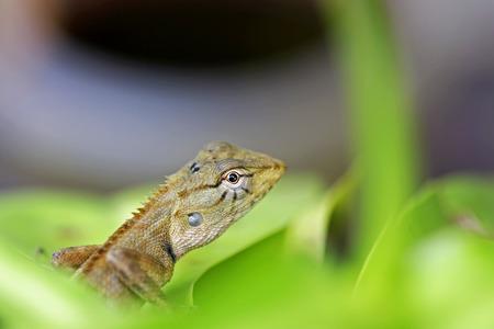 lizard in field: árbol de lagarto en los parques  Foto de archivo