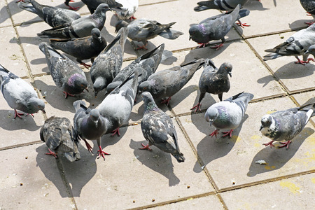 excrement: pigeons on the floor causing excrement and bad smell problem