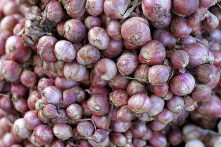 shallot: Shallot onions in a group