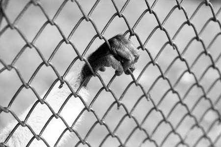incarcerate: Hand monkey are trapped in the cage