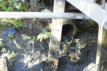 polluting: Sewage pipe polluting the river